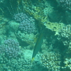 P1050463 - Rode Zee