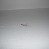 P1050466 - Rode Zee