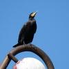 P1170592 - de vogels van amsterdam