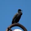 P1170594 - de vogels van amsterdam