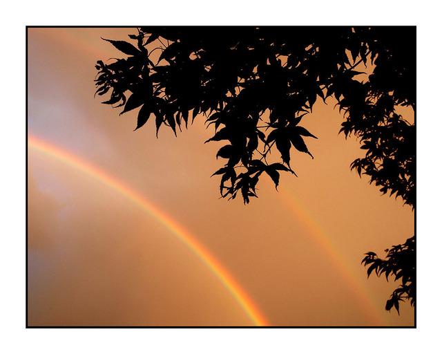 Rainbow 2010b Nature Images