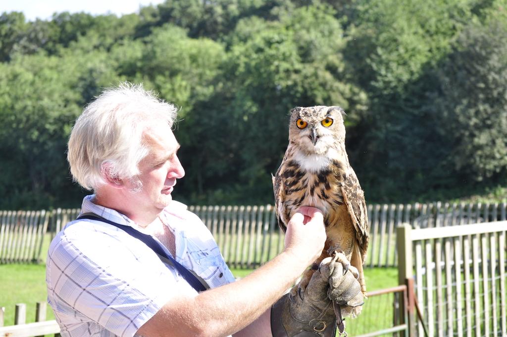 roofvogelsshow den hout 2010 (199) -
