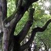 Horta jubelend en spiegelend