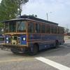 CIMG7076 - Wiosna 2010