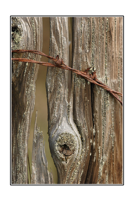 Fence post Close-Up Photography
