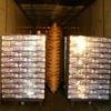 CIMG1210 - Lipiec 2010