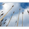 cold Bullrushes - Nature Images