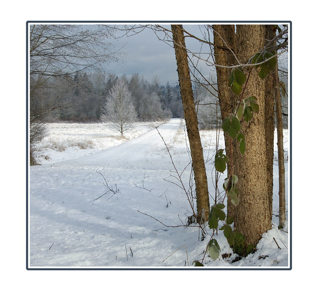 Dear Lake path Landscapes