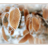 Frozen leaves - Nature Images