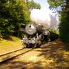 T02554 523879 Lieren - 20100905 Terug naar Toen