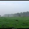 Mist - Nature calls