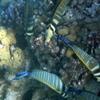 P1040944 - Rode Zee