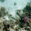 P1040510 - Rode Zee