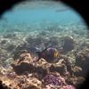P1040425 - seascapes