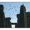 Stone Henge Birds - England and Wales