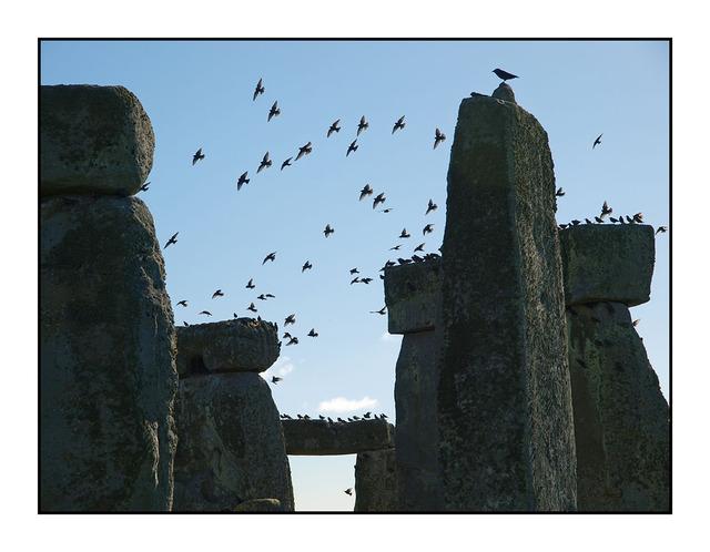 Stone Henge Birds England and Wales