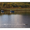 Lough Leane Duck - Ireland
