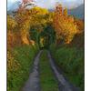 Irish Old Road - Ireland