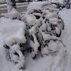 P1200653 - sneeuw