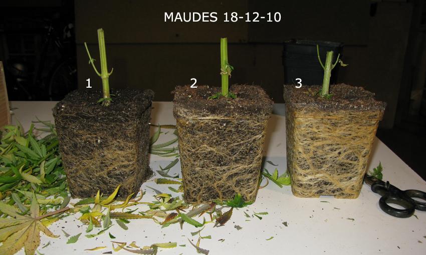 macetas de 3 litros para plantas de 70cm a 90cm.?¿?¿?