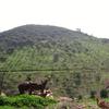 IMGP1985 - Spain 2008