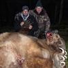bear - 2011 Apex