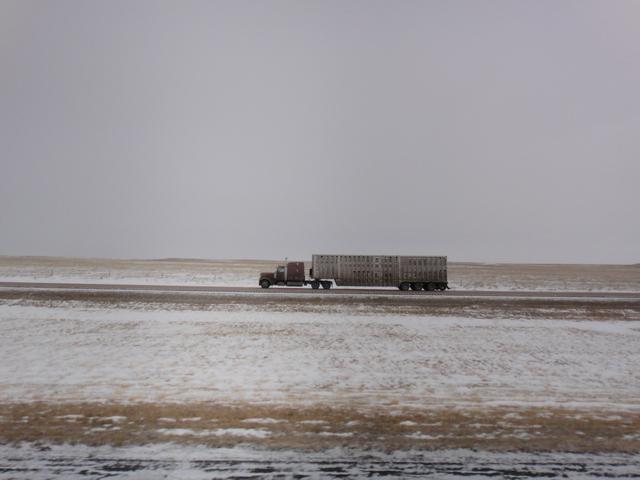 DSC00902 jan 2011