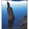 ComoxLake Stump - Nature Images