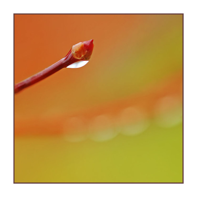 Selective WaterDrop Close-Up Photography