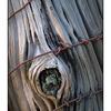 hawk glen 50 macro 01 - Close-Up Photography