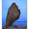 Driftwood Shape - Landscapes