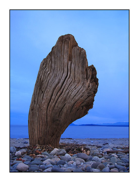Driftwood Shape Landscapes
