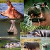 nijlpaard - Knutselhoek