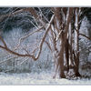 HawkglennInfra - Infrared photography