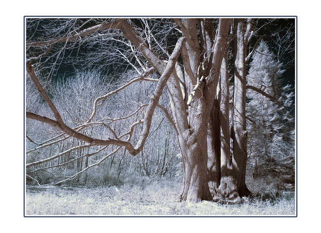 HawkglennInfra Infrared photography