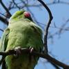 P1210874 - de vogels van amsterdam