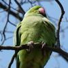 P1210875 - de vogels van amsterdam
