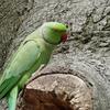 P1210877 - de vogels van amsterdam