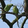 P1210881 - de vogels van amsterdam