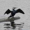 P1040175 - de vogels van amsterdam
