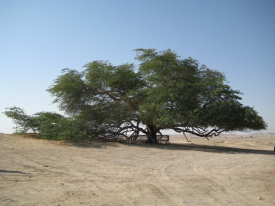 tree-of-life-Bahrain3-550x412 -