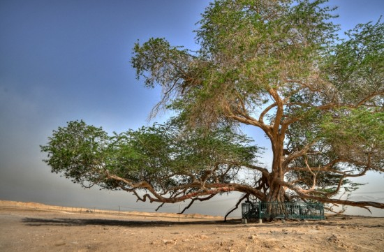 tree-of-life-Bahrain6-550x361 -
