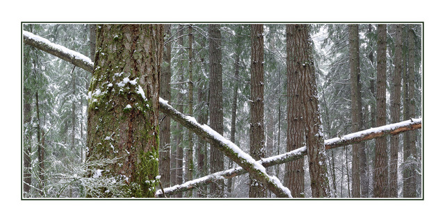 Lerwick tree pano Landscapes