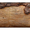Bark Art Panorama - Panorama Images