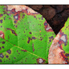 Leaves Decaying - Close-Up Photography