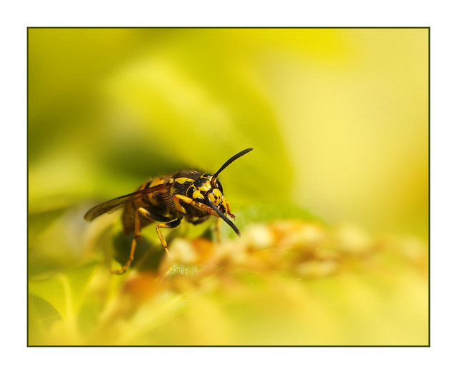 Backyard Wasp Close-Up Photography