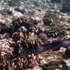 soortenfluitvis - soortnamen