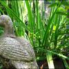 Tuin1 - Nature calls