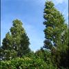 Tuin2 - Nature calls