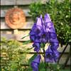 bloem - Nature calls